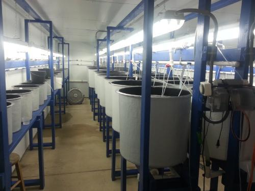 room for production of larval marine fish