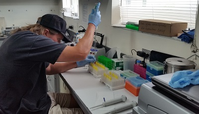 Shane working on cortisol samples